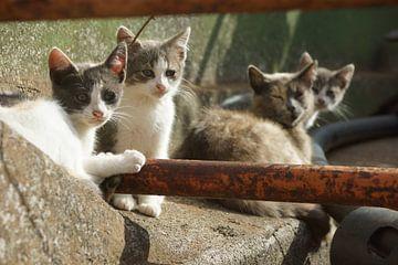 Kat en Kittens von Michel van Kooten