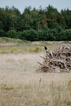 Auf Holz sitzende Krähe von Jessica Arends