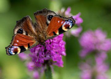 Vlinder van Ada van der Lugt
