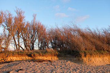 Am Hochufer von Ostsee Bilder