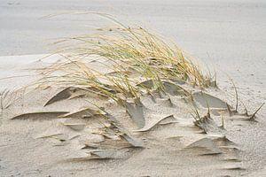 strand stilleven van eric van der eijk