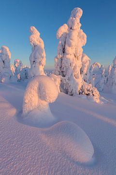LP 71302193 Gefrorene Bäume, Riisitunturi-Nationalpark, Posio, Lappland, Finnland von BeeldigBeeld Food & Lifestyle