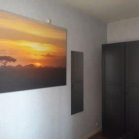 Kundenfoto: Lion King von Richard van der Zwan
