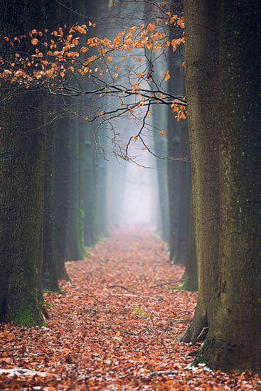 The red path van Edwin Mooijaart