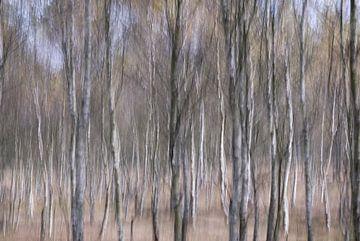 bomen van Ester Besuijen