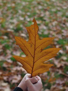 Herfst in kinderhandjes van Annie Lausberg-Pater