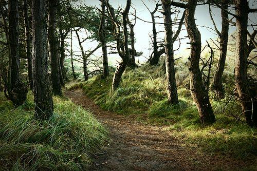 Trail into the unknown von
