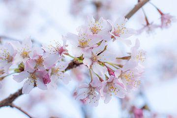 Blühen im eigenen Garten von Clazien Boot