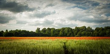 Colorphoto sur Mees van den Ekart