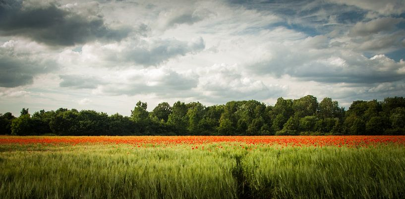 Colorphoto van Mees van den Ekart