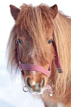 Pony in de sneeuw van Kim Roelofs-Huender