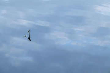 Lucht op het water van R Smallenbroek