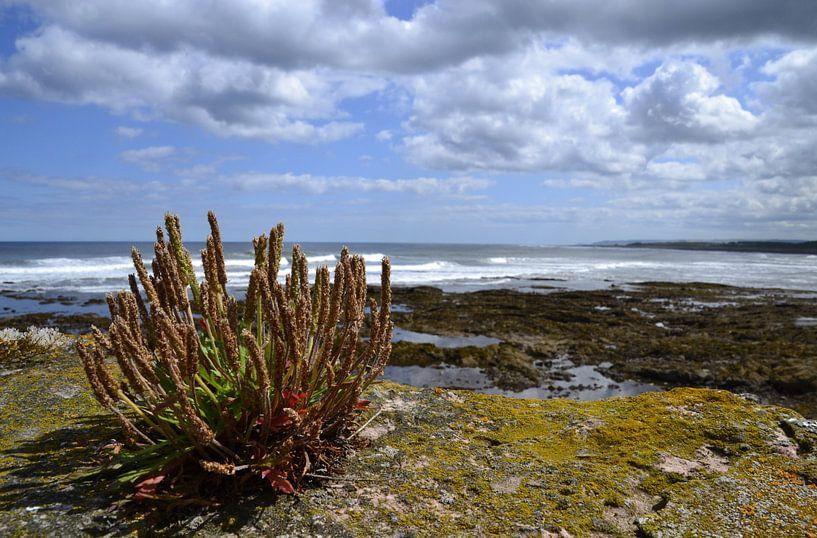 Kust bij Dunbar in Schotland von Susan Dekker