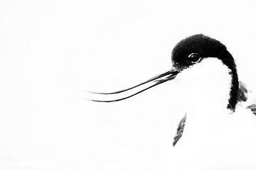 Porträt eines Säbelschnäblers von Anja Brouwer Fotografie