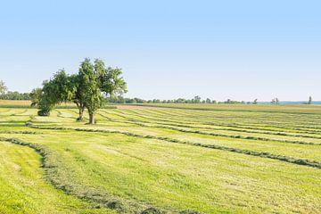 Gemaaide weide met fruitbomen van Achim Prill