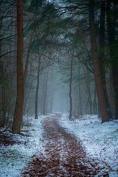 Nebliger und verschneiter Wald von Jayzon Photo