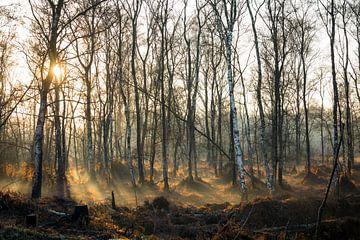 Sonnenuntergang mit Nebel Nationalpark der Groote Peel von Ger Beekes
