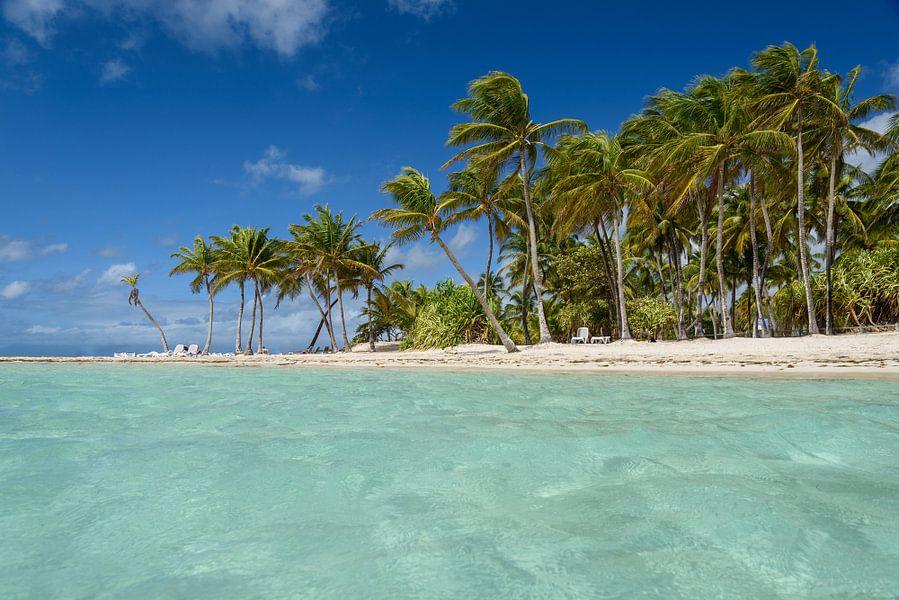 Paradise van Ellen van den Doel
