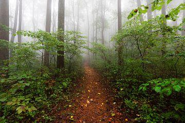 Forest Trail Smoky Mountains, Nature Magick  von PI Creative Art