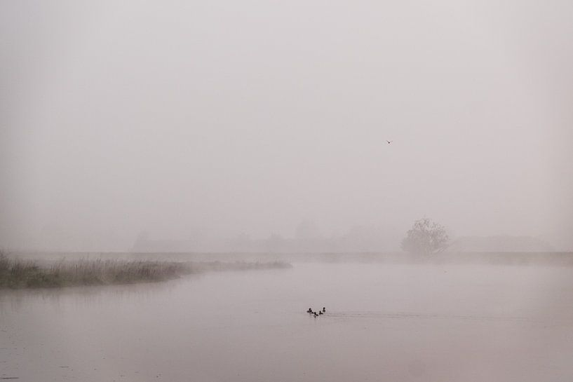 Vroege, mistige ochtend in de Hemelrijkse Waard bij Lithoijen van Wouter Bos