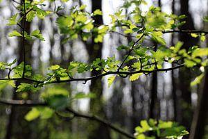 Wald im Frühling