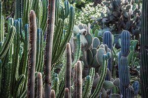 Vol met Cactussen van