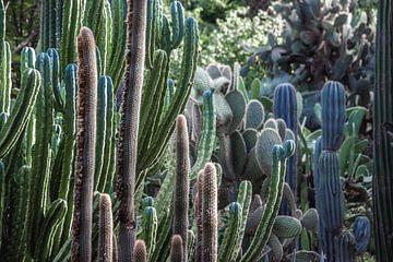 Vol met Cactussen van Wendy van Aal