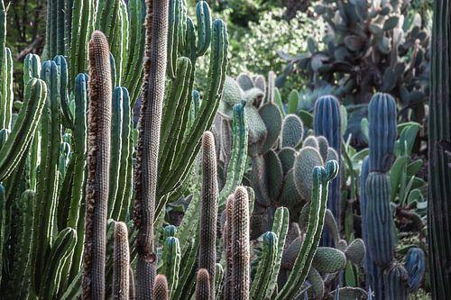 Vol met Cactussen