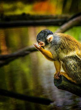 jong aapje van Harrie Muis