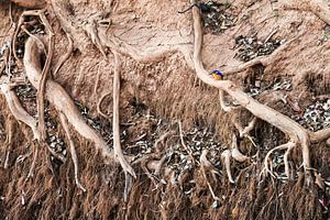 Ijsvogel in Madagaskar van