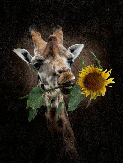 De zonnige Giraffe