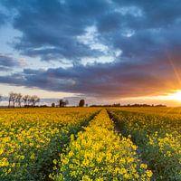 Natur Wandbilder -