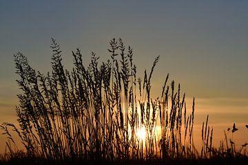 Gräser beim Sonnenuntergang von Ulrike Leone