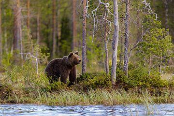 bear van Daniela Beyer