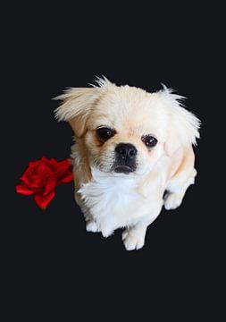Dog van Iris van Bokhorst