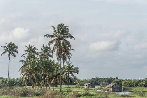 Palmbomen in een groen landschap aan de kust in West-Afrika | Benin