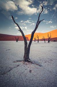 Geen water om te overleven van Joris Pannemans - Loris Photography