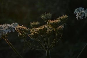 Soft Spot van Linda Slingerland