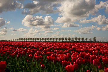 Tulpenveld met bomenrij van Kerstin Lotze