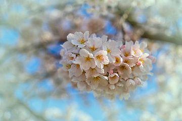 Frühling, Ja Blüte in den Niederlanden von Marly De Kok