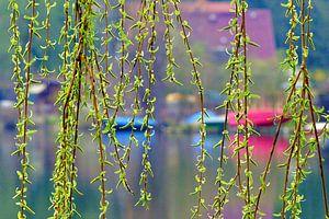 Frühlingserwachen am See  van