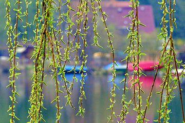 Frühlingserwachen am See  von Heidrun Carola Herrmann