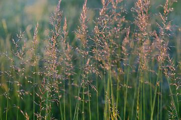 Wilde Gräser mit Samen von Ulrike Leone