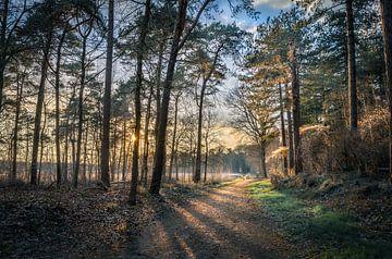 Breda Mastbos zonsondergang van Andre Gerbens