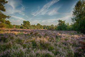 Landschapsfoto van bloeiende paarse heide van