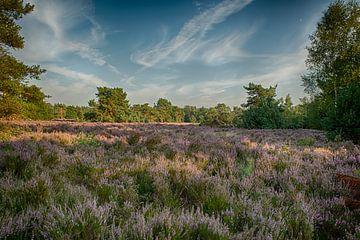 Landschapsfoto van bloeiende paarse heide von Peter van der Wal