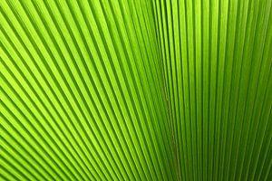 Abstract tropisch groen blad van StudioMaria.nl