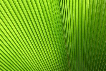 Feuille verte tropicale abstraite sur StudioMaria.nl