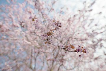 Frühlingsblüte von joas wilzing
