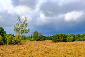 Stormwolken boven heide en bos op de Lemelerberg van Sjoerd van der Wal